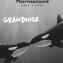 MARINELAND photo 210x280
